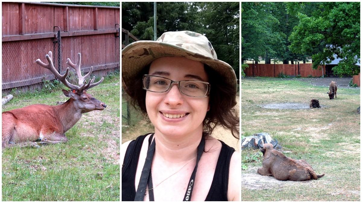 Rezerwat pokazowy Żubrów wycieczka do Białowieży żubry jeleń blog