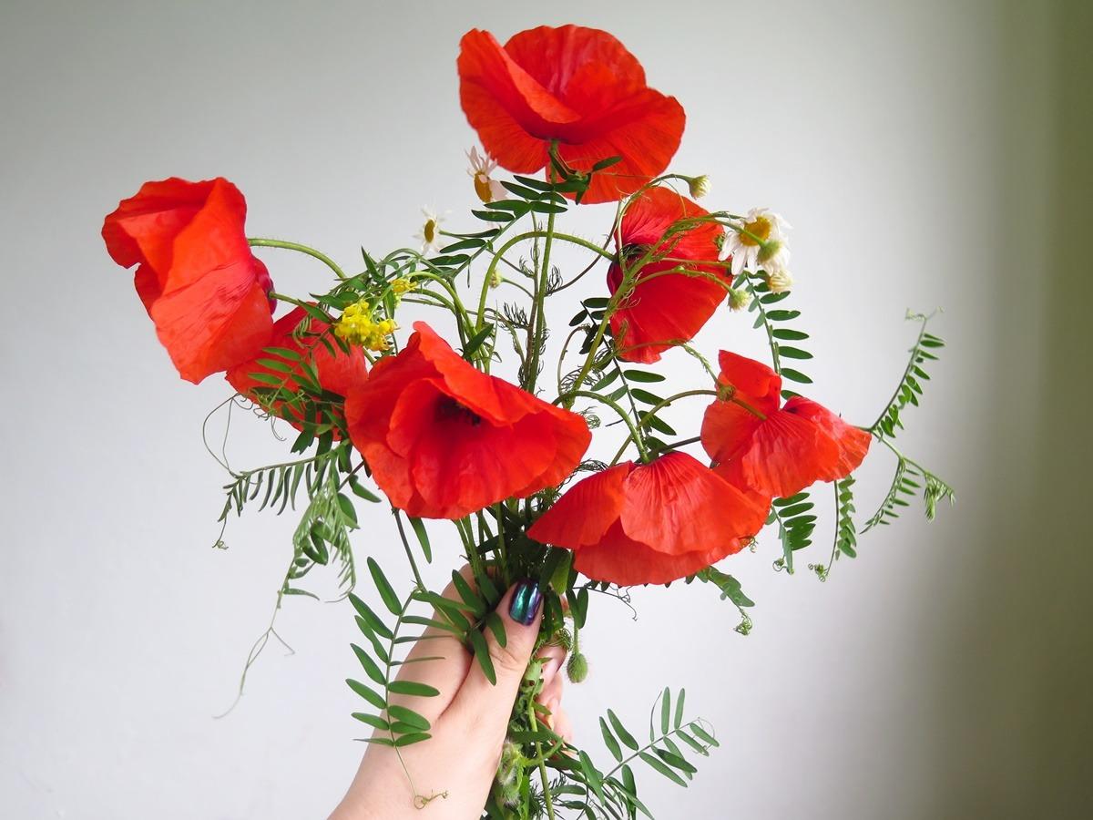 bukiet polnych kwiatów maki czerwone mak