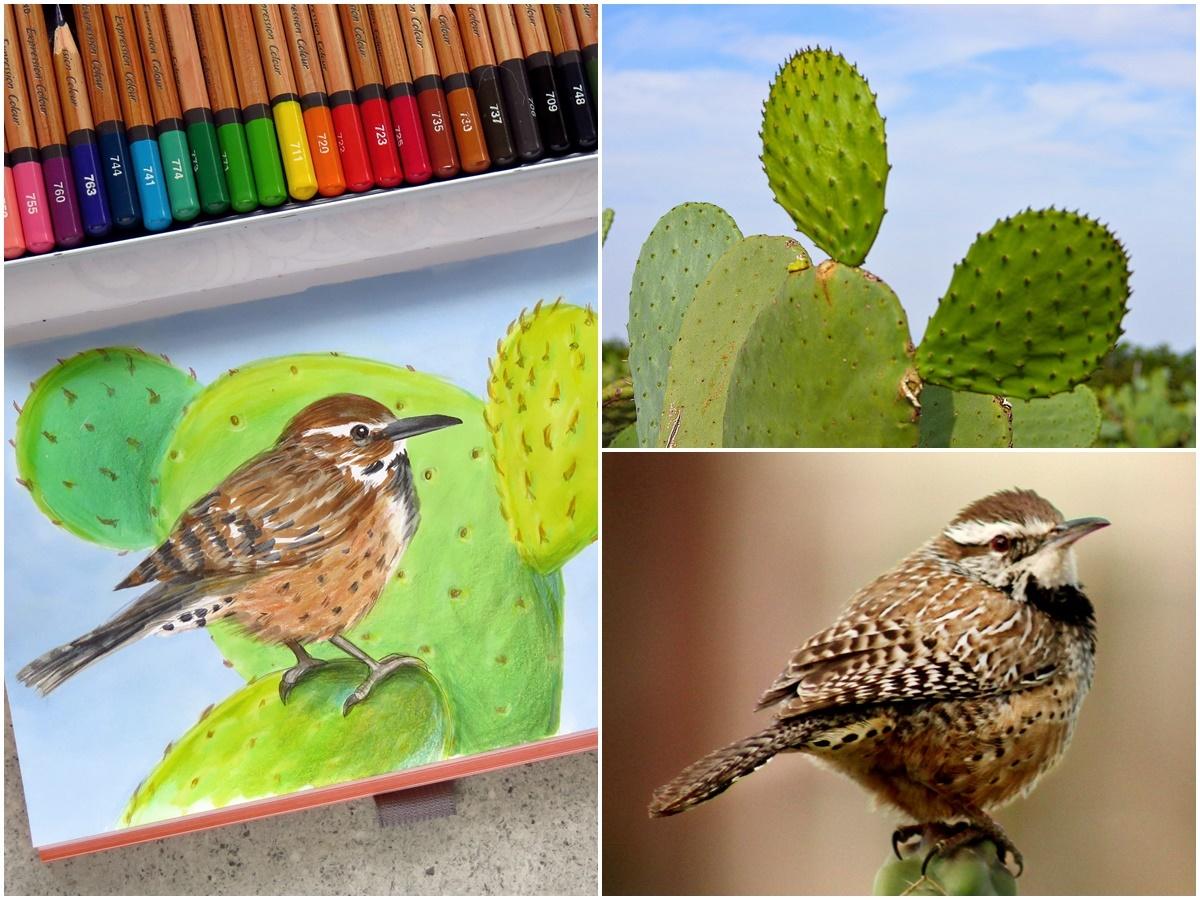 jak rysować kaktus ptak