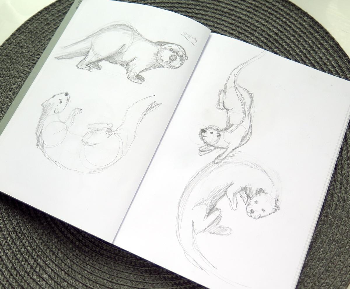 szkicownik szkice ołówkiem rysunki wydry zwierzęta jak rysować